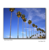 San_diego_pacific_beach_palms